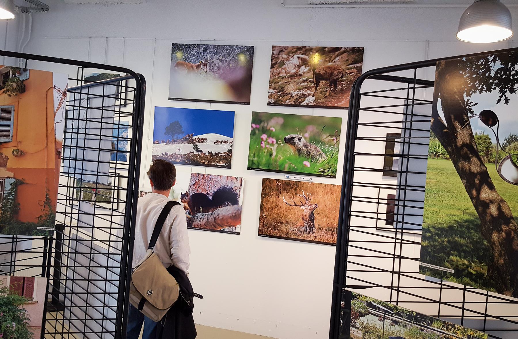 Exposition a 2000 m tres dans les pyr n es au troisi me salon de la photographie garonn 39 amopa - Salon des animaux toulouse ...